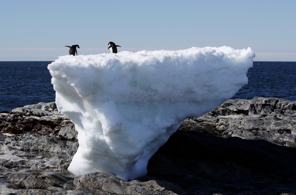 Two Adelie penguins stand atop a block of melting ice on a rocky shoreline at Cape Denison, Commonwealth Bay, in East Antarctica